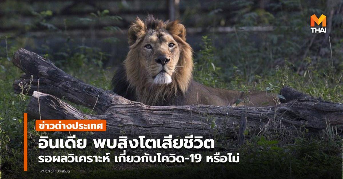 ข่าวต่างประเทศ สิงโต อินเดีย โควิด-19