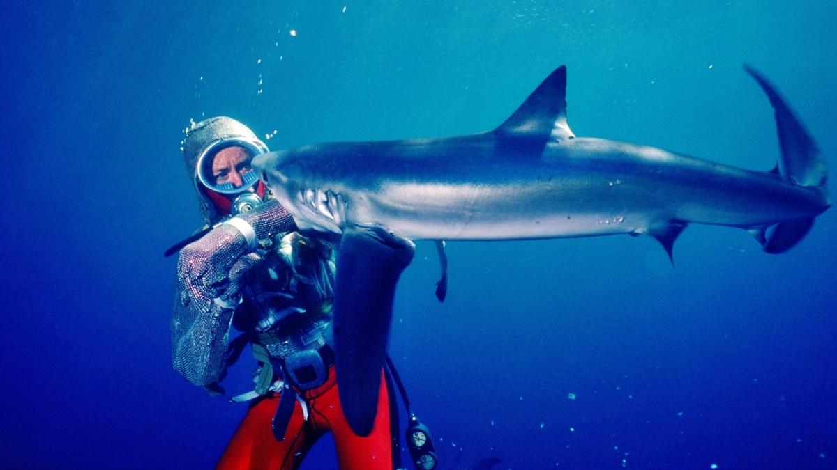 Playing with Sharks ภาพยนตร์สารคดี วาเลอรี เทย์เลอร์ สารคดี