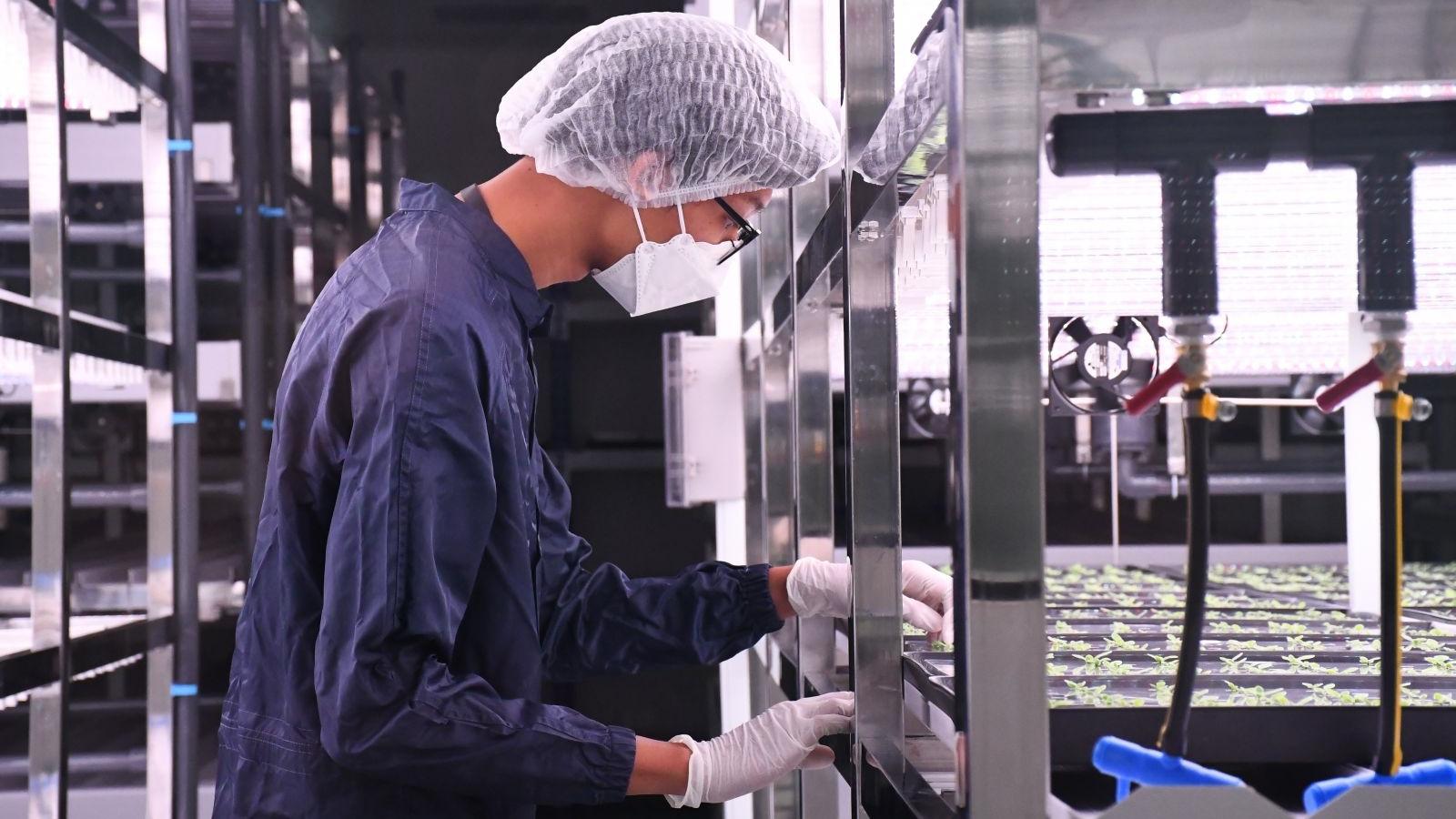 จุฬา-ใบยา วัคซีนโควิด วัคซีนโควิดไทย