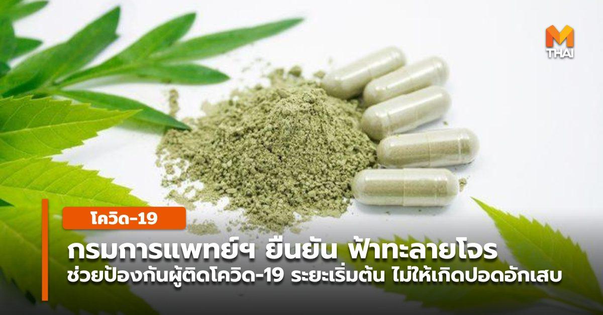 กรมการแพทย์แผนไทยฯ ผู้ป่วยโควิด-19 ฟ้าทะลายโจร รักษาโควิด โควิด-19