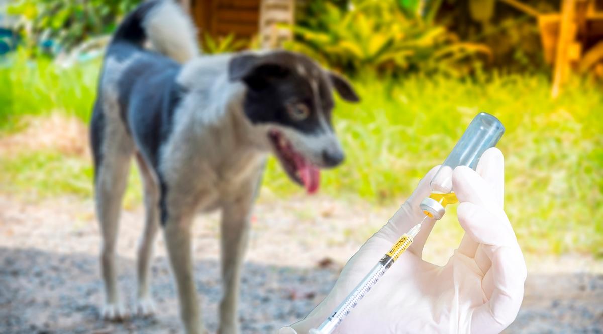 วัคซีนป้องกันพิษสุนัขบ้า วัคซีนโควิด-19 วิธีดูแลสุขภาพ โรคพิษสุนัขบ้า