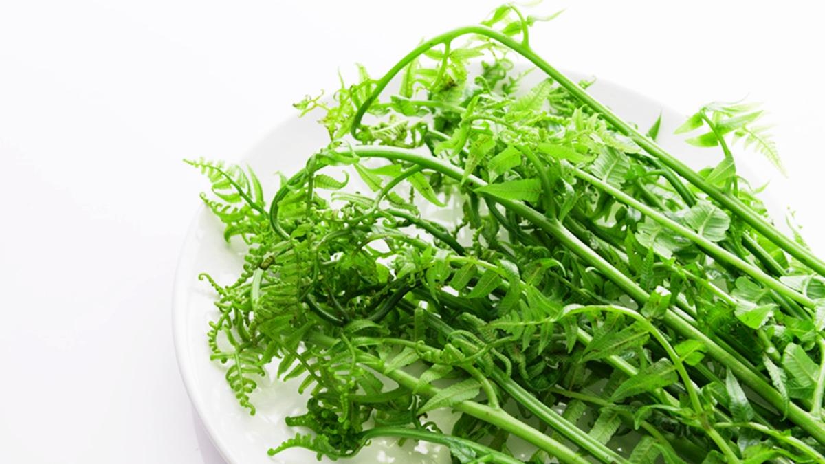 ปลูกผัก ผักสวนครัว วิธีปลูกผักกูด