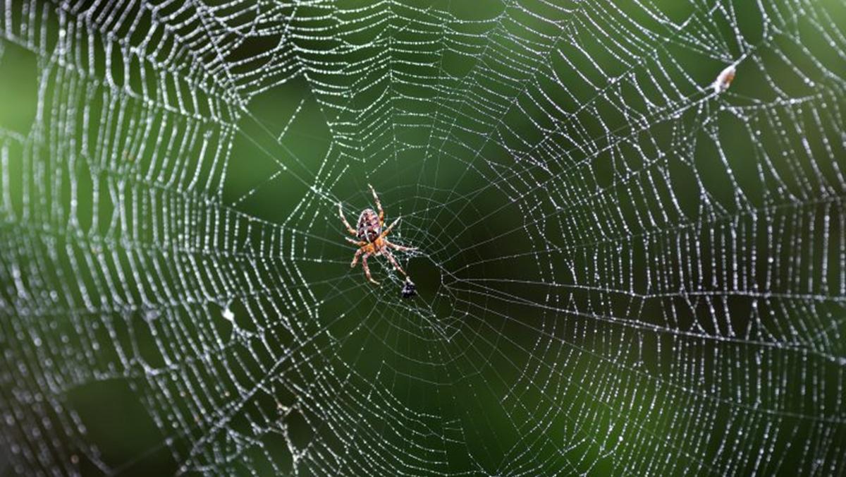 วิธีไล่แมงมุม เทคนิคทำความสะอาดบ้าน